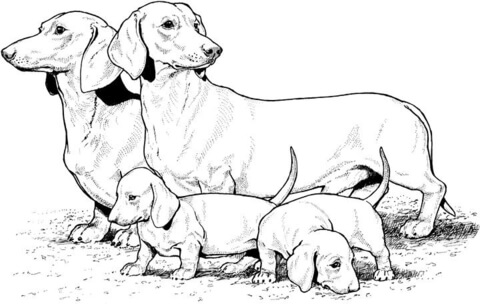 dachshund coloring pages # 6