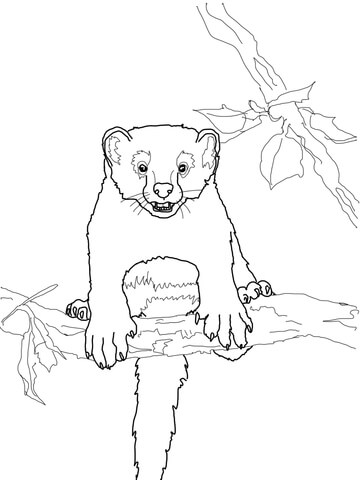 Curious Fisher Cat Coloring Page Free Printable Coloring