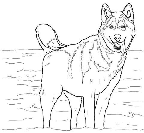 Click To See Printable Version Of Siberian Husky Coloring Page