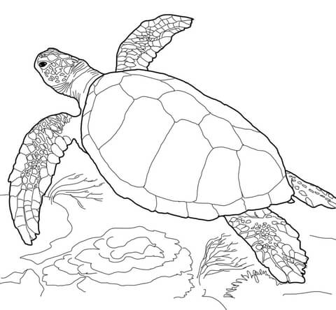 coloring pages turtle # 7