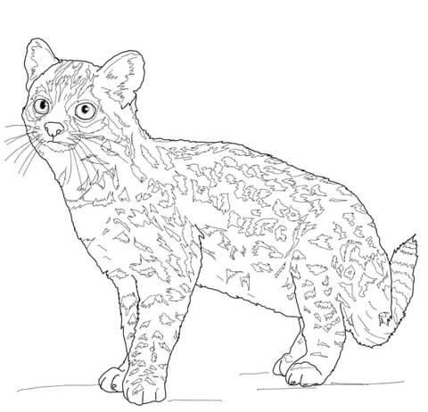 Oncilla Tiger Cat Coloring Page Free Printable Coloring