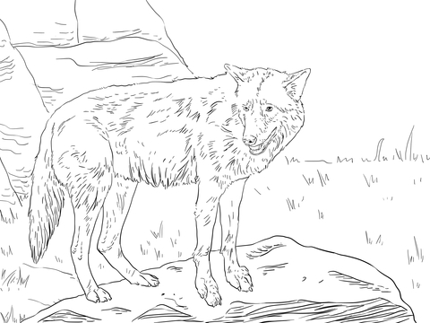 Eastern Wolf Coloring Page Free Printable Coloring Pages