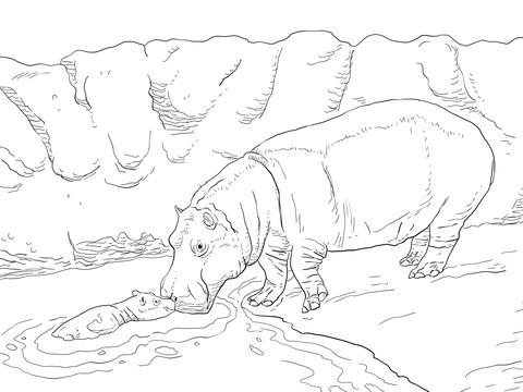 Ausmalbild Flusspferdweibchen Mit Ihrem Jungtier
