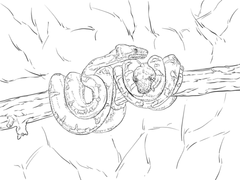 Emerald Tree Boa Coloring Page Free Printable Coloring Pages