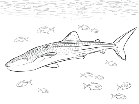 Realistic Whale Shark Coloring Page Free Printable