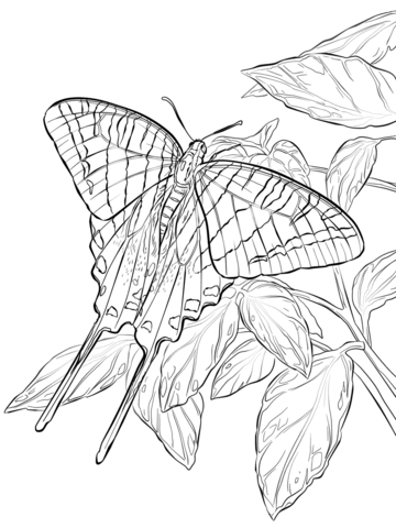 Zebra Swallowtail Butterfly Coloring Page Free Printable