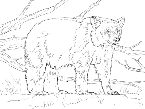 This guide covers the first part of that list (the basics of drawing). Taiga Animals Coloring Pages Free Printable Pictures