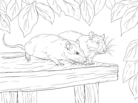 Two Rats Coloring Page Free Printable Coloring Pages