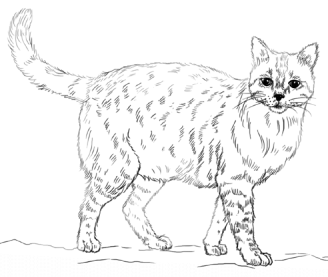 Realistic Cat Coloring Page Free Printable Coloring Pages