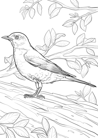 robin coloring page # 1