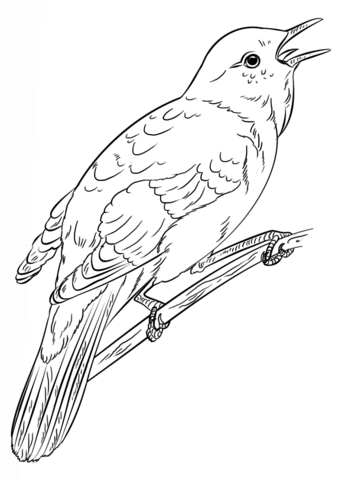 Common Nightingale Coloring Page Free Printable Coloring