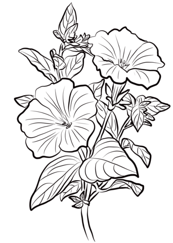 Petunia Coloring Page Free Printable Coloring Pages