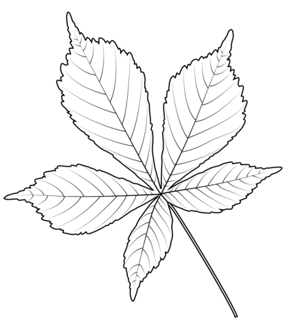Horse Chestnut Leaf Coloring Page Free Printable Coloring Pages