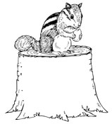 chipmunk coloring pages # 4