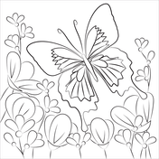Butterfly Coloring Pages Free Coloring Pages