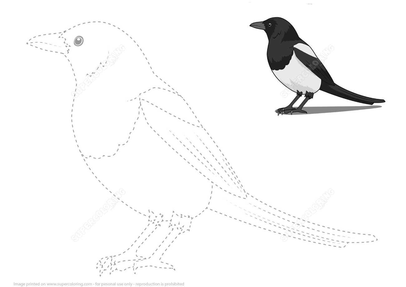 Draw A Magpie By Tracing Dashed Line And Color
