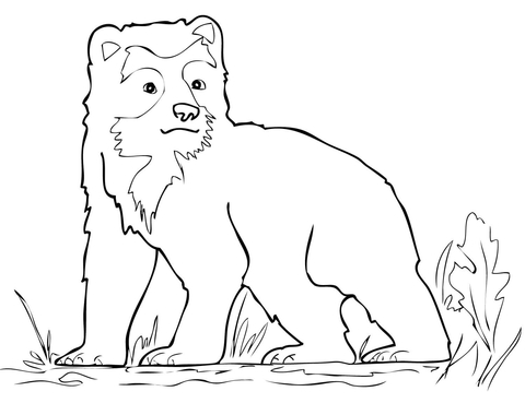 Spectacled Bear Cub Coloring Page Free Printable