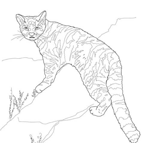 Andean Mountain Cat Coloring Page