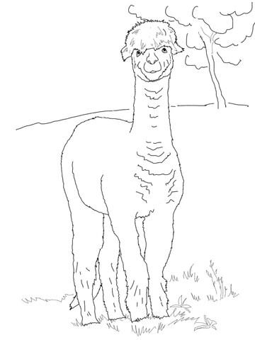 Funny Alpaca Coloring Page