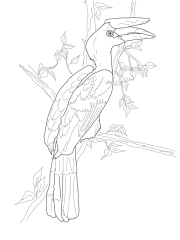 Perched Rhinoceros Hornbill Coloring Page