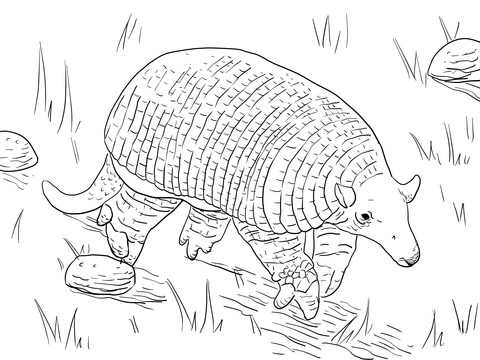 Giant Armadillo Coloring Page