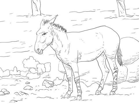 Somali Wild Ass Coloring Page