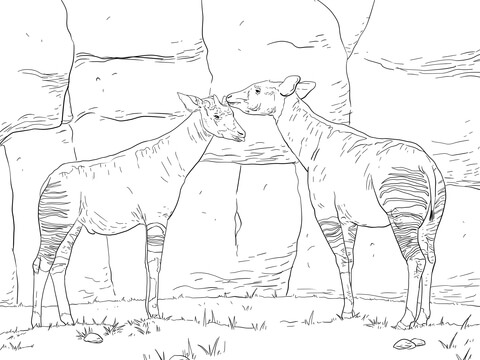 Two Okapis Coloring Page