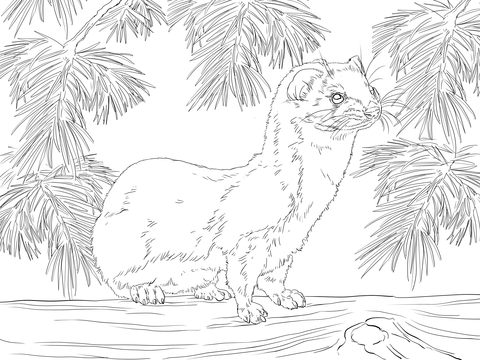 Least Weasel Coloring Page