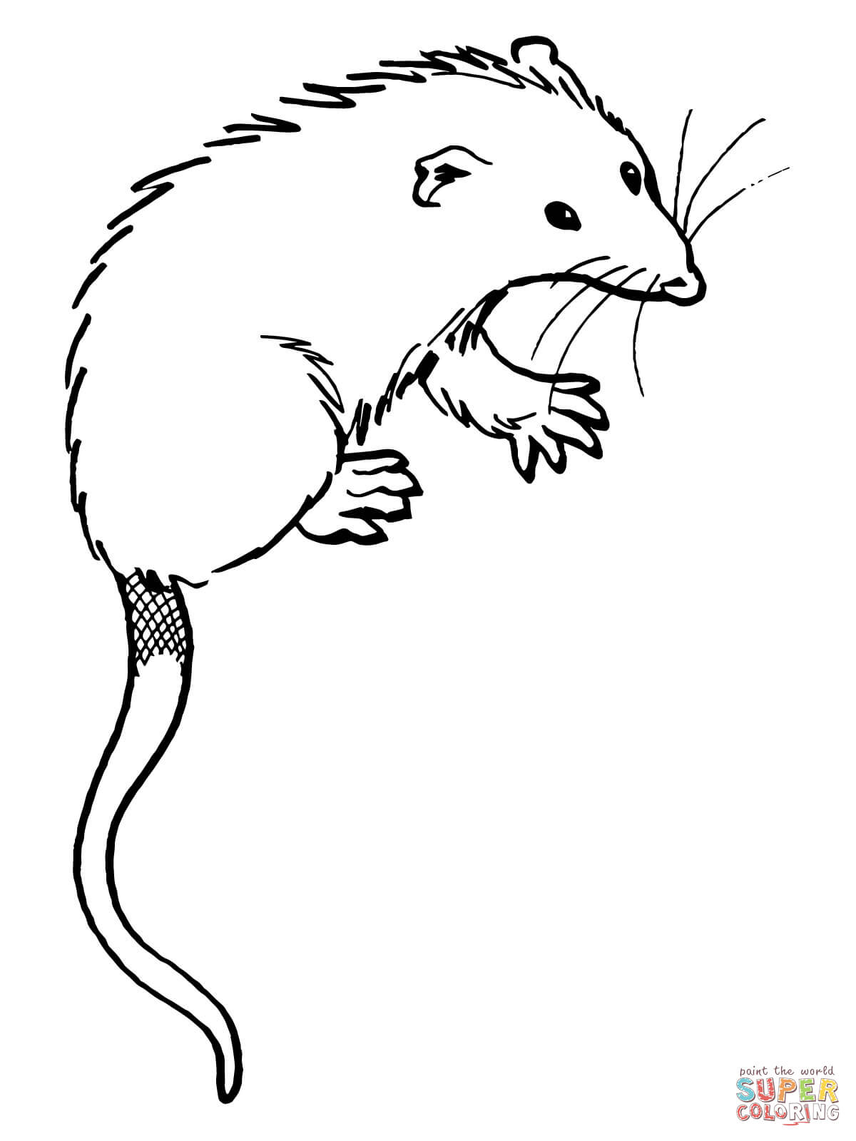 Possum Printable Coloring Pages