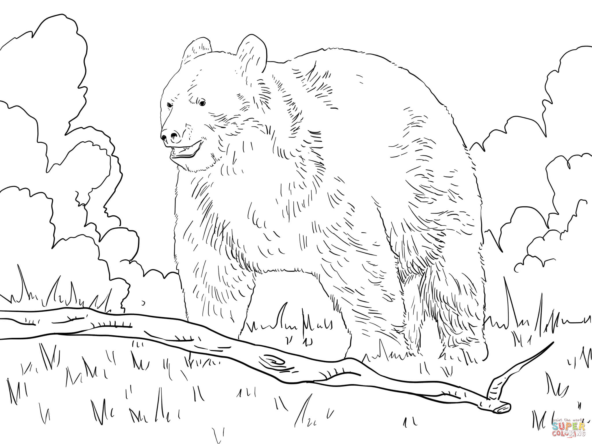 Black Bear In A Forest Coloring Online