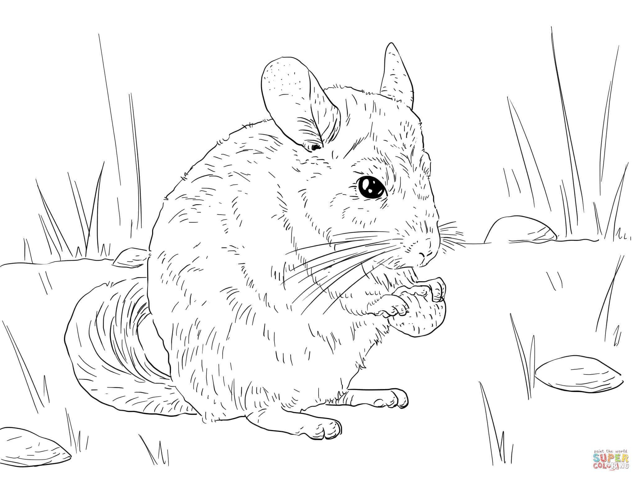 Long Tailed Chinchilla Coloring Online
