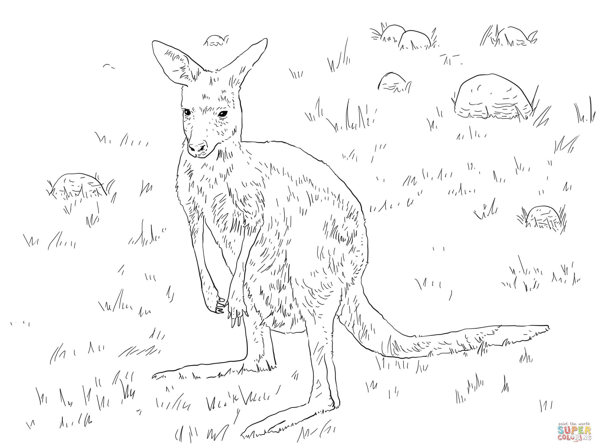 Young Eastern Grey Kangaroo Coloring Online