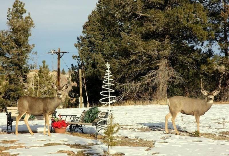 deer in colorado image