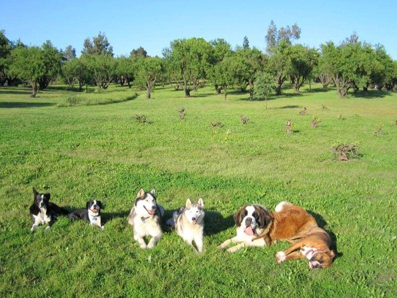 Dog Training Sacramento