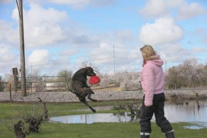 dog catching frisbee image