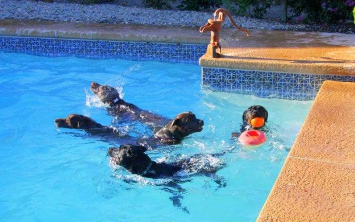 fetch in the pool image