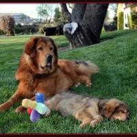 Superdog Puppy Page