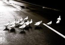 O Líder Aprendiz em Momentos de Incerteza