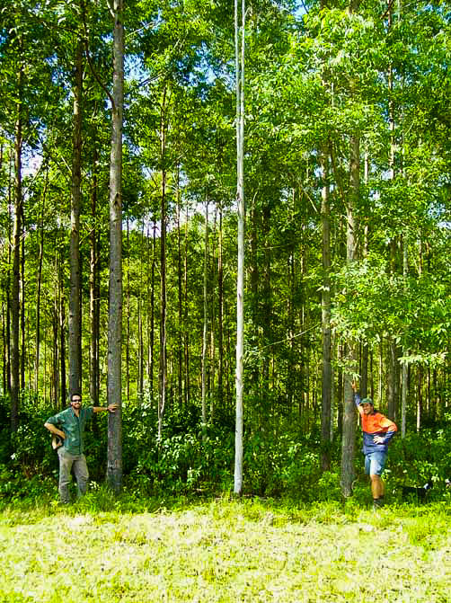 "Mark & James in 10 year old Gympie Messmate Plantation, planted 2002, ""White Beech"" property."