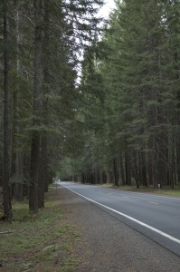 Almost 60 miles of redwood forest from Crater Lake to Prospect, OR