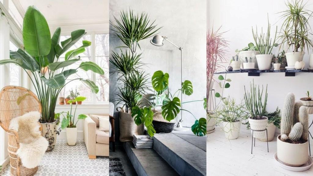 Indoor Plant Room
