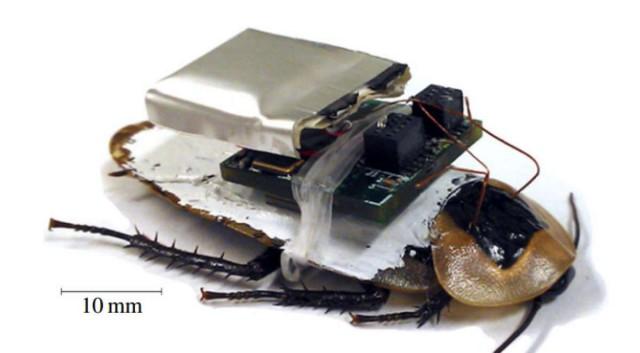 cyborgroach