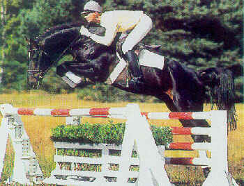 Image result for fabriano stallion