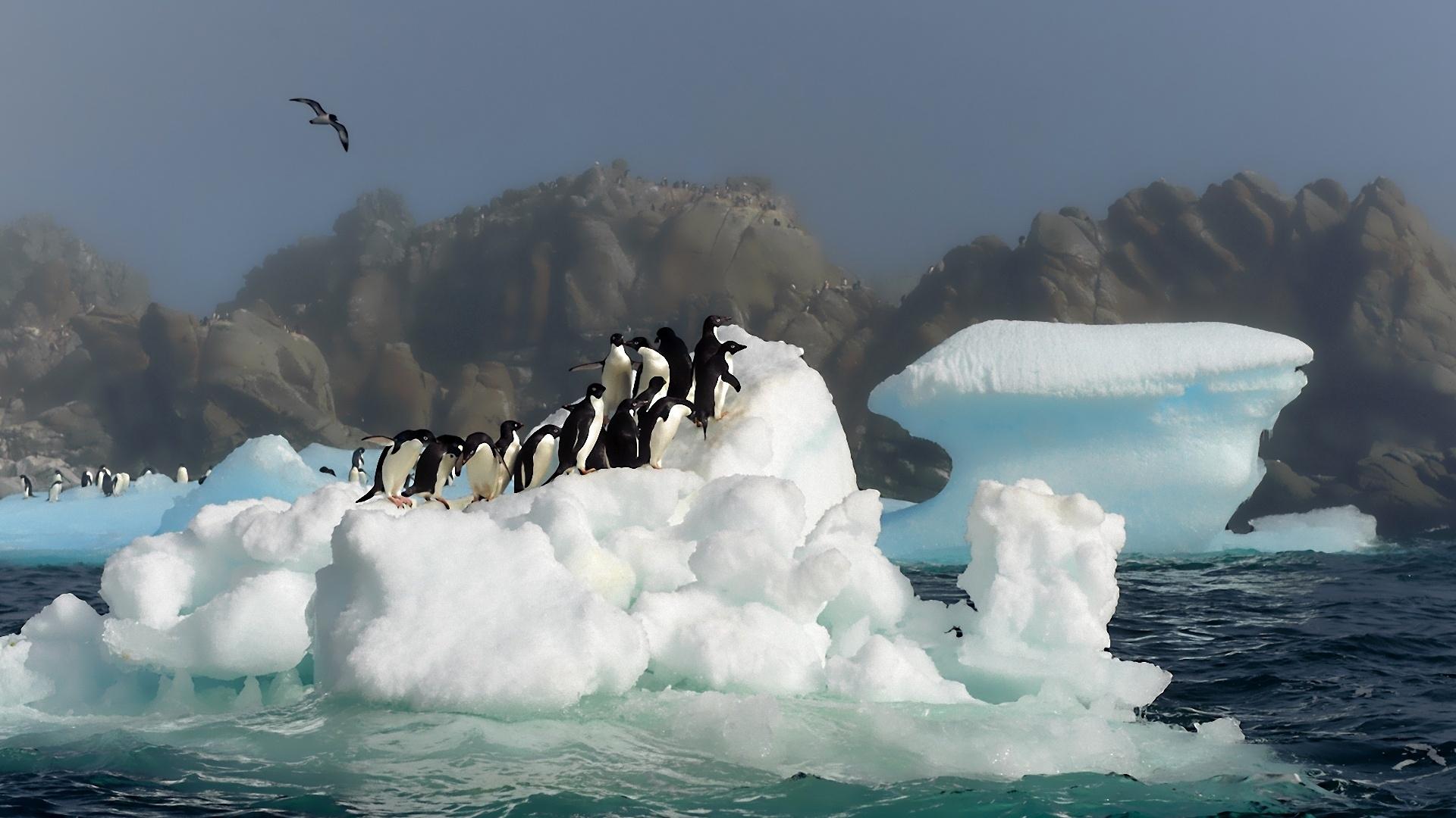 Many Penguins On A Iceberg Antarctica Wallpaper