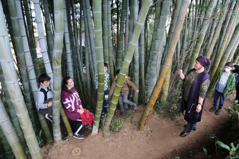 25 yil once gurcistandan getirip artvine diktiler buyuyen bambular ilgi odagi oldu 1 - 25 yıl önce Gürcistan'dan getirip Artvin'e diktiler! Büyüyen bambular ilgi odağı oldu