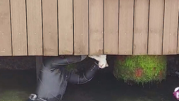 Beylerbeyi'nde iskele altına sıkışan kedi kurtarıldı