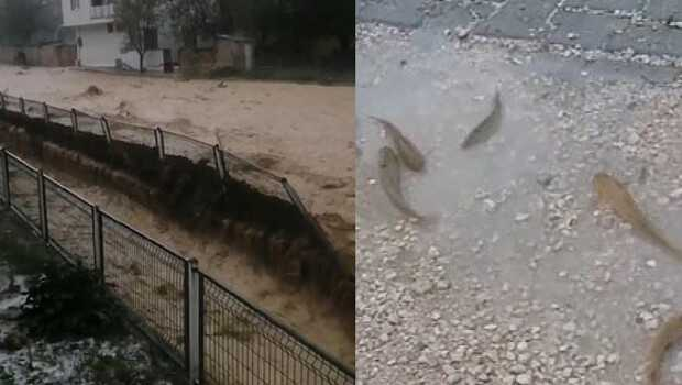 Gürün'de sağanak yağmur dereyi taşırdı, balıklar yola savruldu