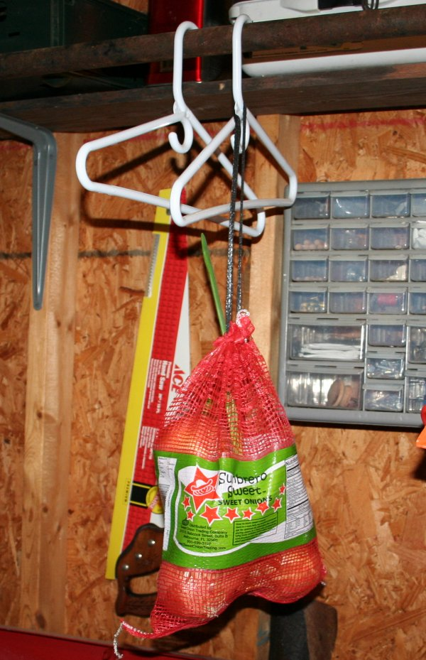 Onions hanging in garage