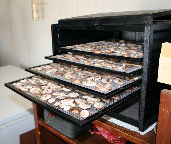 Put trays in dehydrator