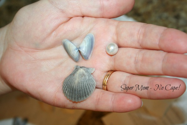 Photo of sea shells for making Sea Shell Angels